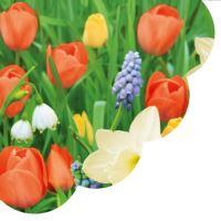 Szalvéta PAW R Tulips Meadow