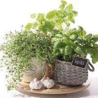 Szalvéta PAW L 33x33cm Flavor of Herbs